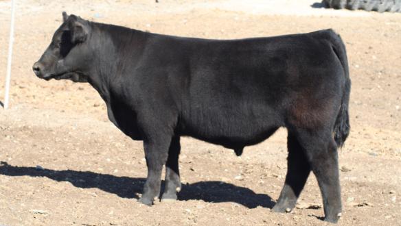 015-steer